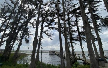 The wind blew the Spanish moss horizontal on Lake Lochloosa. PAT FOSTER-TURLEY/FOR THE NEWS-LEADER
