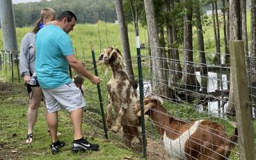 Feeding a herd of goats is just one of the simply pleasures available to those who take a day trip through the back roads of southeast Georgia. PAT FOSTER-TURLEY/FOR THE NEWS-LEADER