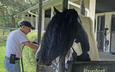 Gypsy Vanner horses have long, free-flowing manes and tails, lots of hair flowing from behind their knees and hocks, and beautiful coat colors, with a gentle personality to match. PAT FOSTER-TURLEY/FOR THE NEWS-LEADER